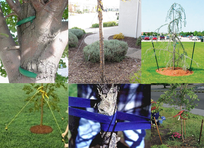 Tree Staking Methods Good and Bad
